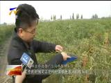枸杞采摘器带动茨农增产增收 -181021