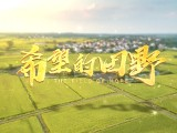 微视频:希望的田野