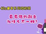 小杞葡哥系列短视频《说说葡萄酒》第三集:葡萄酒的颜色为什么不一样