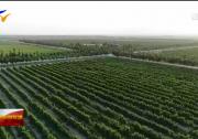 宁夏:一瓶葡萄酒撬动产业升级-20201026