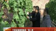 """宁夏设施葡萄焕发""""第二春"""" -2017年12月18日"""