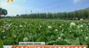 """西吉:""""四个一""""工程实现山绿民富-181010"""
