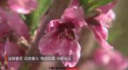 遇见宁夏| 桃花朵朵闹枝头~