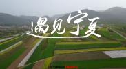 遇见宁夏丨年产值30亿元,固原的这项产业你了解吗?