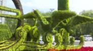 100万盆鲜花扮靓银川,原来是这场大会要开了