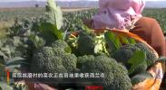 遇见宁夏| 在这里 冷凉蔬菜不仅是致富的宝贝 更是如画的美景!