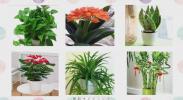 《语文》我的植物朋友