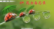 《语文》4*昆虫备忘录