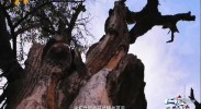 宁夏文旅荟|宿星星故乡 览塞上奇观