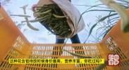 山乡巨变| 这种花含苞待放时候身价最高,营养丰富,你吃过吗?