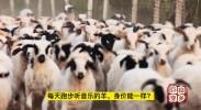 山乡巨变| 每天跑步听音乐的羊,身价能一样?