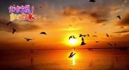 (打卡宁夏 就等你来)五月到沙湖 戏水玩沙观百鸟