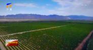 农业农村部 工业和信息化部 自治区人民政府联合印发《宁夏国家葡萄及葡萄酒产业开放发展综合试验区建设总体方案》-20210527