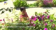 中宁县:花团锦簇扮靓美丽乡村