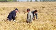 宁夏:粉煤灰变废为宝 助力盐碱地改良