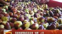 """科技创新帮助灵武长枣""""抢鲜""""上市-2018年4月26日"""