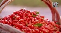 国家地理标志保护产品——宁夏枸杞