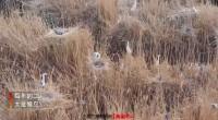 国际爱鸟日|宁夏卫视融媒体直播带你现场观鸟看景