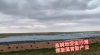 盐池:盐碱地变金沙滩 螺旋藻育新产业