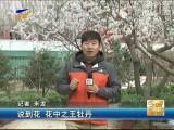 到中山公园赏牡丹品文化