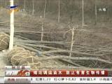 规范调运苗木 防止有害生物传播-4月7日