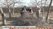 变废为宝 果树枝有了新用途-3月28日