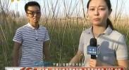 """4G直播:蔬菜价格政策性保险 为蔬菜种植保""""价""""护航-2017年6月7日"""