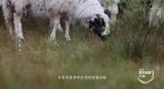 宁夏盐池——中国滩羊之乡