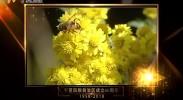 7文化宁夏视频