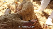 """改革开放同龄人(5)徐军:贺兰山下的""""牛人"""""""