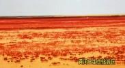 黄河入海蕴奇观 百鸟翔游水云间