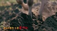 國寶里的寧夏故事丨西夏第一牛