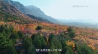 CCTV新冠肺炎防疫公益广告《野生动物保护篇》60s
