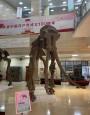 """宁夏地质博物馆举办古生物化石主题系列展览――""""万象更新""""科普展"""