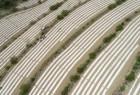 旱作梯田种出生态致富路