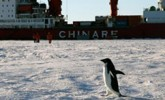 南极风光·可爱生灵