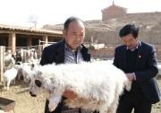 """【网络媒体走转改】金融活水浇开""""羊倌""""们的致富花儿"""