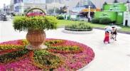 20万盆鲜花喜迎中阿博览会