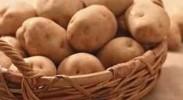 全国土豆价格回落明显但同比仍高50%