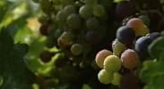 葡萄美酒西夏王