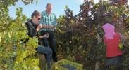 贺兰山东麓升腾的紫色梦想——宁夏葡萄产业率先进入依法发展轨道