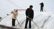 大雪冻伤256棚蔬菜 红寺堡全力抵御雪灾