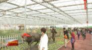 记者带你逛花博:蔬菜来和花争相媲美