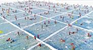 600余名钓友如意湖边炫技