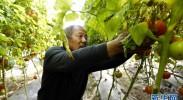 简泉村:整村发展设施农业 助力农民增收致富