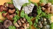 食药监部门:野生菌食用有技巧 切忌混杂加工和饮酒