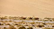 新疆罗布泊野骆驼国家级自然保护区严禁旅游探险
