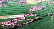 一幅绿色产业蓬勃发展的乡村美景