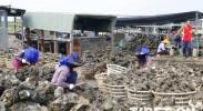 【新时代•幸福美丽新边疆】探访中国蚝乡养殖产业 看高品质生蚝如何长成