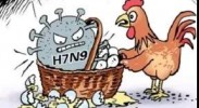 科学预防传染病—预防人感染禽流感